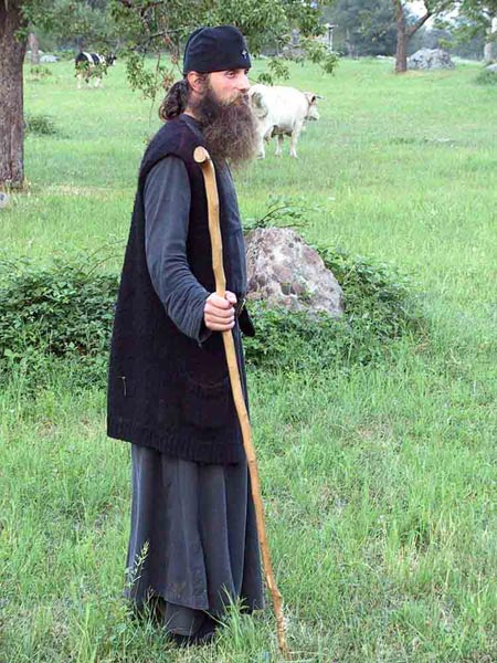 Fr. Daniel taking the cows to the field, Visoki Decani Monastery, Serbia