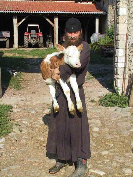 Fr. Daniel with a new calf, Visoki Decani Monastery, Serbia