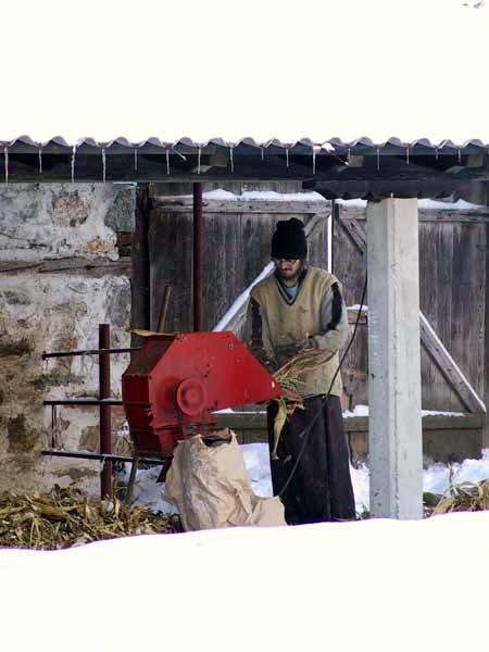 Preparing food for cows, Visoki Decani Monastery, Serbia
