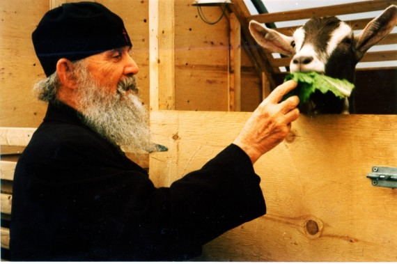 Elder Ephraim of Philotheou (Athos) at the barn of the Holy Monastery of the Theotokos of Consolation in Lachute, Quebec (Canada)